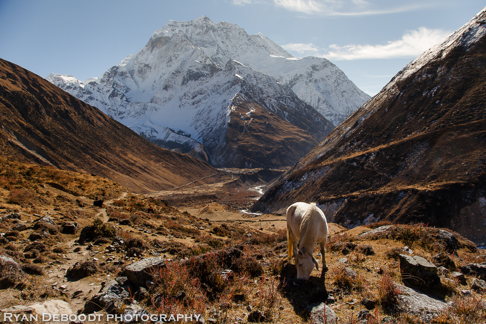 With no roads high up in the Himalayas, local people get around either by walking or by horse.